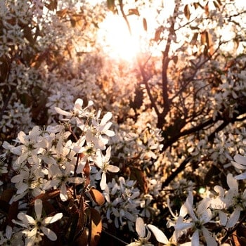Free stock photo of sunshine, spring, tree, blooms