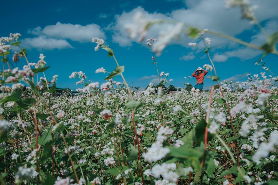 bane, blomster, flora