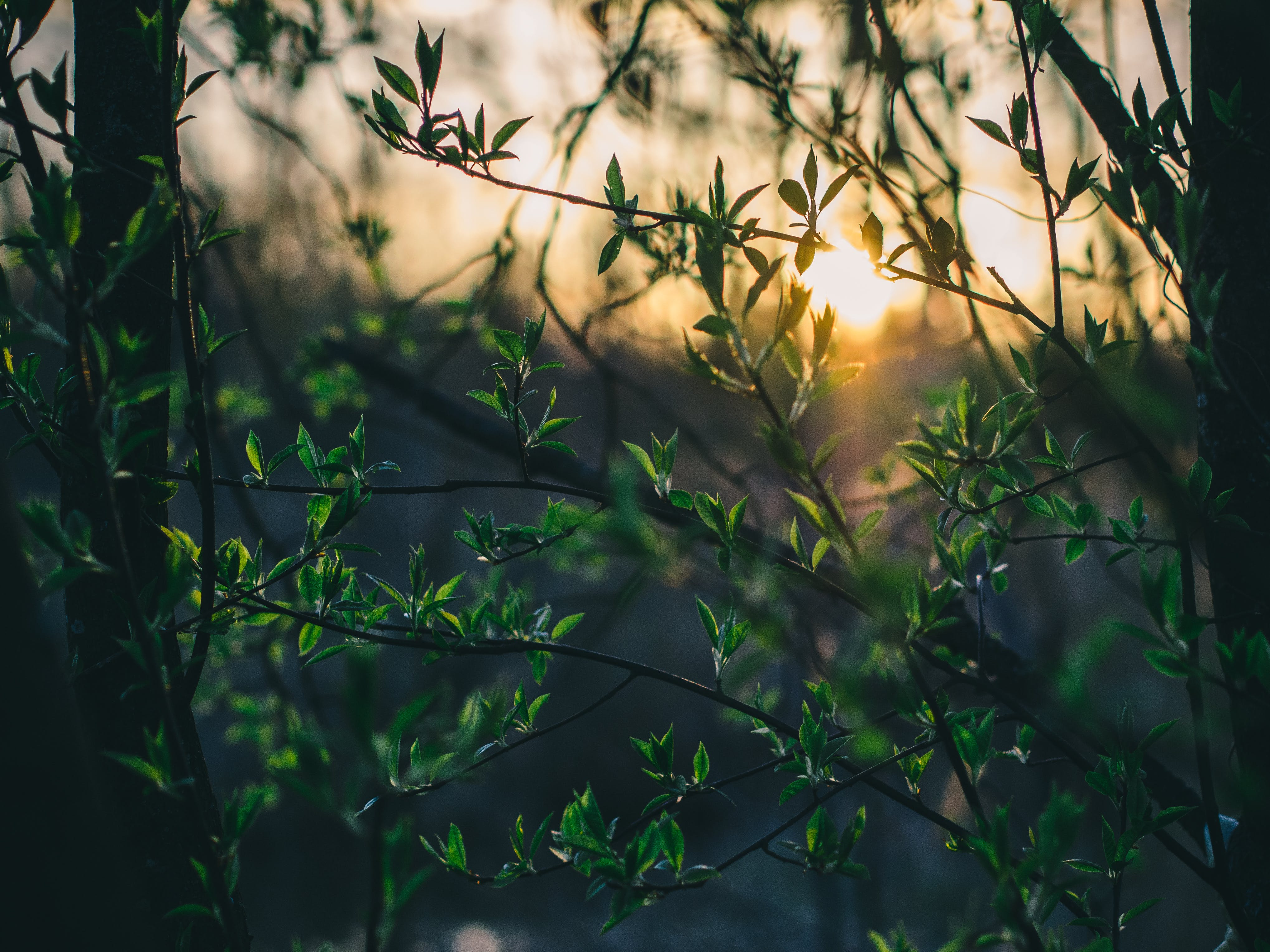 Silhouette Photography of Green Leafed Plant
