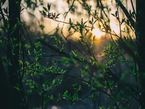 Darmowe zdjęcie z galerii z drzewa, drzewo, gałęzie, las