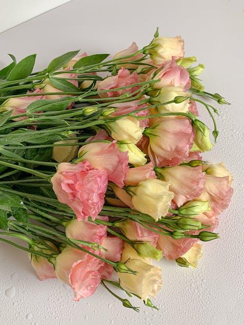 Gratis arkivbilde med blomster, blomsterblad, blomstret