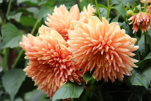 Безкоштовне стокове фото на тему «вродлива, квітка, красиві квіти, Природа»