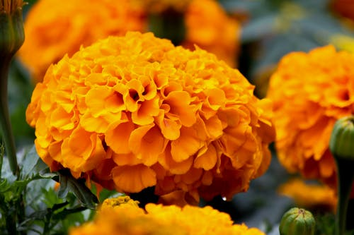 Безкоштовне стокове фото на тему «апельсин, вродлива, жовтий, квітка»