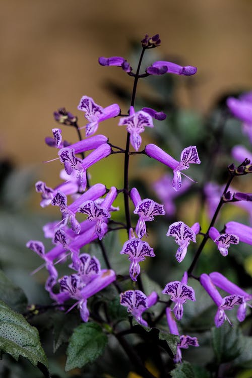 alam, bagus, bunga
