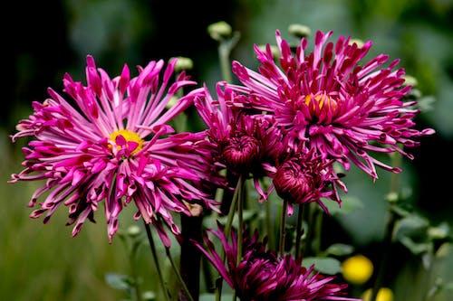 Безкоштовне стокове фото на тему «Букет квітів, жовтий, зелений, квітка»