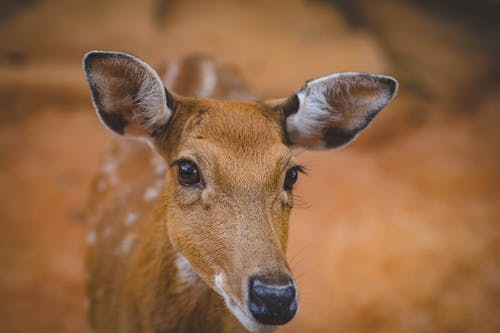 Fotobanka sbezplatnými fotkami na tému antilopa, cicavec, divé zviera, divočina