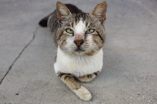 Δωρεάν στοκ φωτογραφιών με sooc, αδέσποτες γάτες, γάτες, περιπλανώμενος