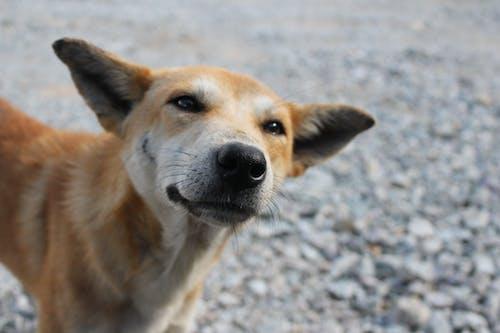 Δωρεάν στοκ φωτογραφιών με sooc, αδέσποτο σκυλί, σκύλος, χαμογελαστος σκυλοσ
