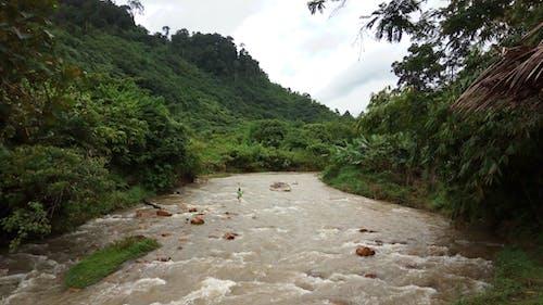 Δωρεάν στοκ φωτογραφιών με ζούγκλα, μητέρα φύση, φύση, ψαράς