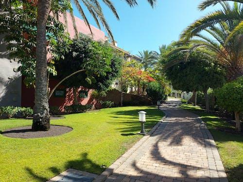グランカナリア, ホテル, 休日の無料の写真素材