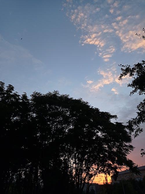 Foto profissional grátis de alvorecer, amanhecer, árvores