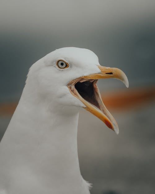 Close-Up Shot of a Seagull