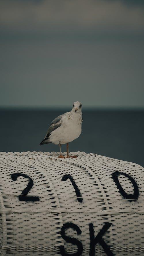 Close-Up Shot of a White Bird