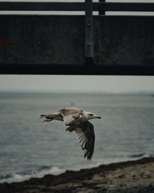 Kostenloses Stock Foto zu federn, fliegen, gefieder