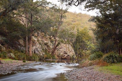 Foto d'estoc gratuïta de a l'aire lliure, aigües tranquil·les, arbres