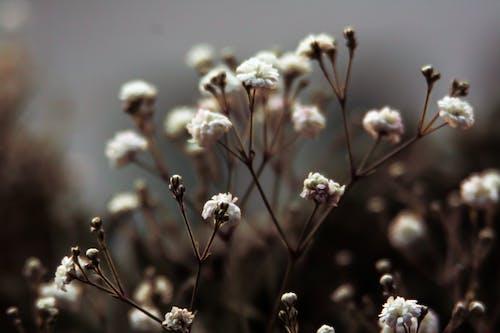 Бесплатное стоковое фото с белый цветок, весенний цветок, завод, размытый