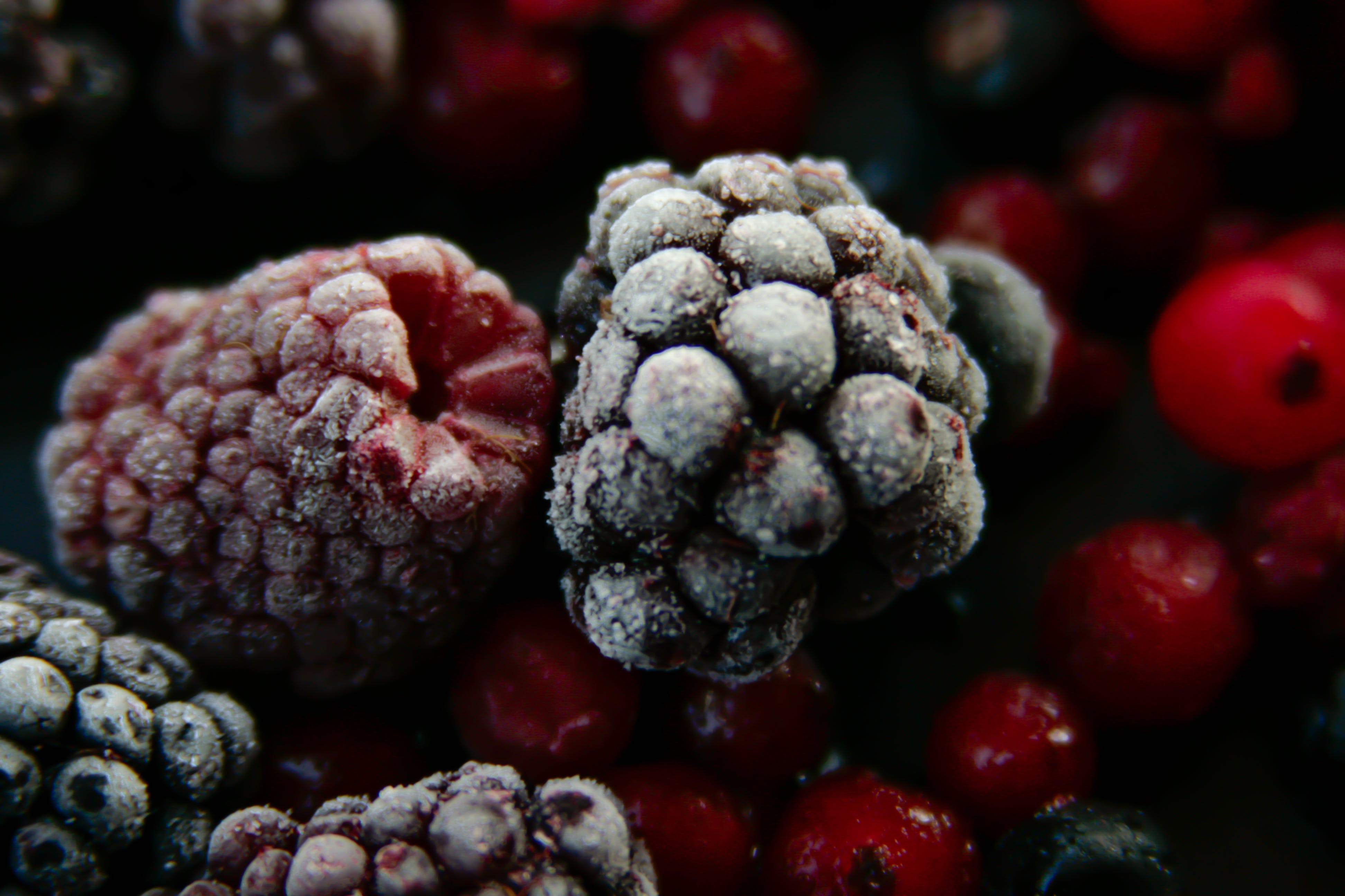 Free stock photo of blackberries, cranberries, food, frozen