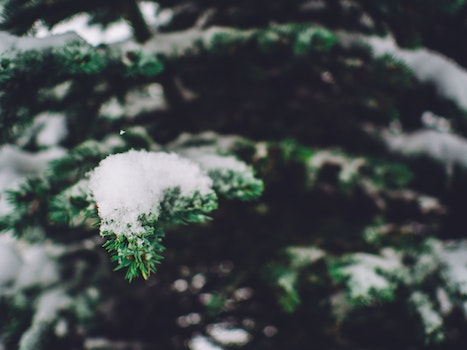 Free stock photo of cold, snow, winter, leaf
