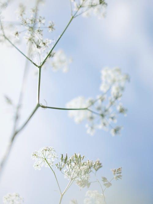 垂直拍攝, 增長, 天性 的 免費圖庫相片