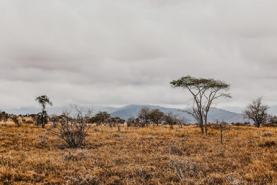 горы, деревья, дикая природа