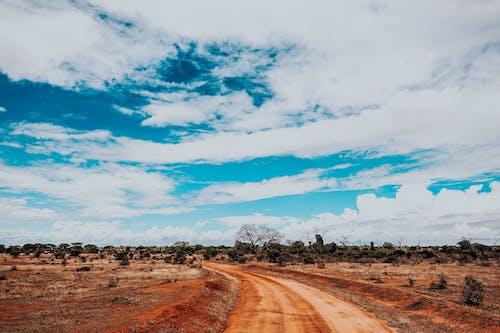 冒險, 喜怒無常, 天性, 天空 的 免费素材照片