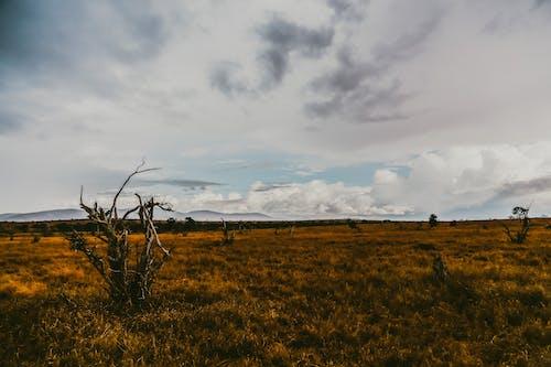 Бесплатное стоковое фото с на открытом воздухе, небо, пейзаж, Приключение