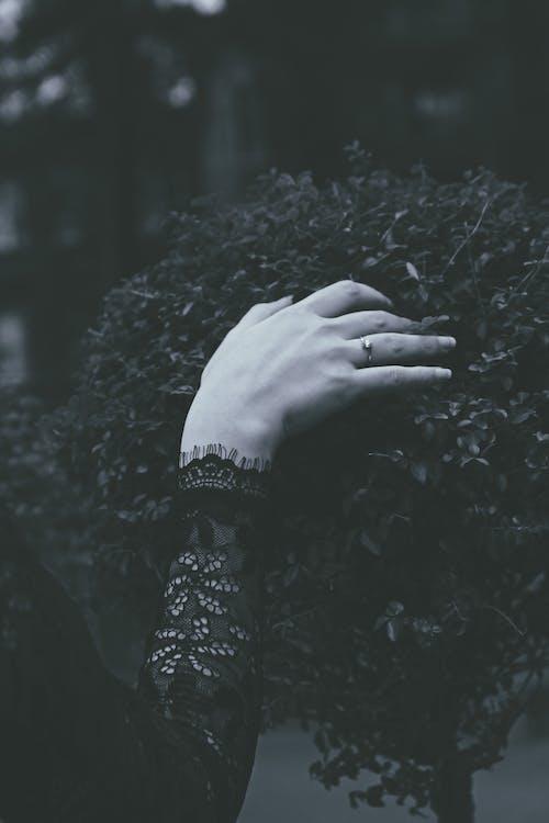 černobílá, černobílý, rostlina