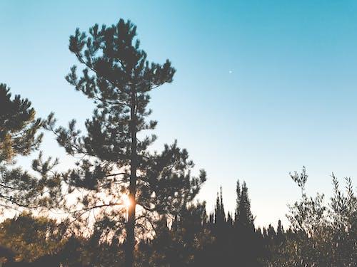 Foto profissional grátis de alvorecer, árvores, cênico, floresta