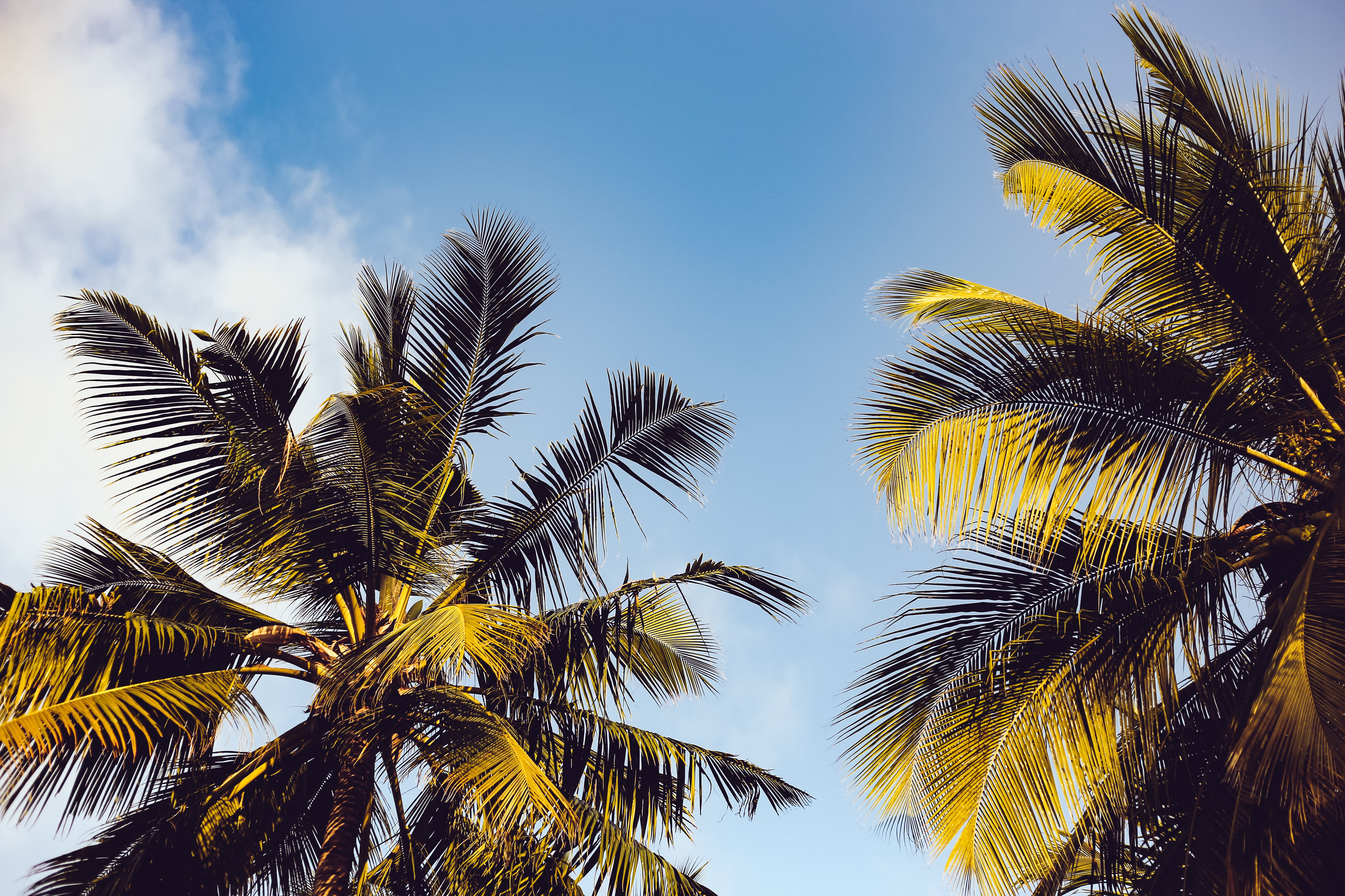 Clear Blue Sky over Two Coconut Trees