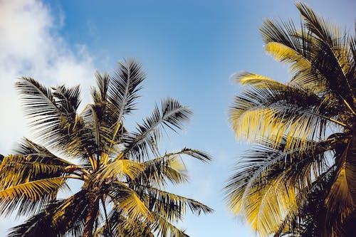 Foto d'estoc gratuïta de arbres, cel, cocoters, dia