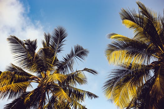 1000 interesting palm trees photos pexels free stock photos