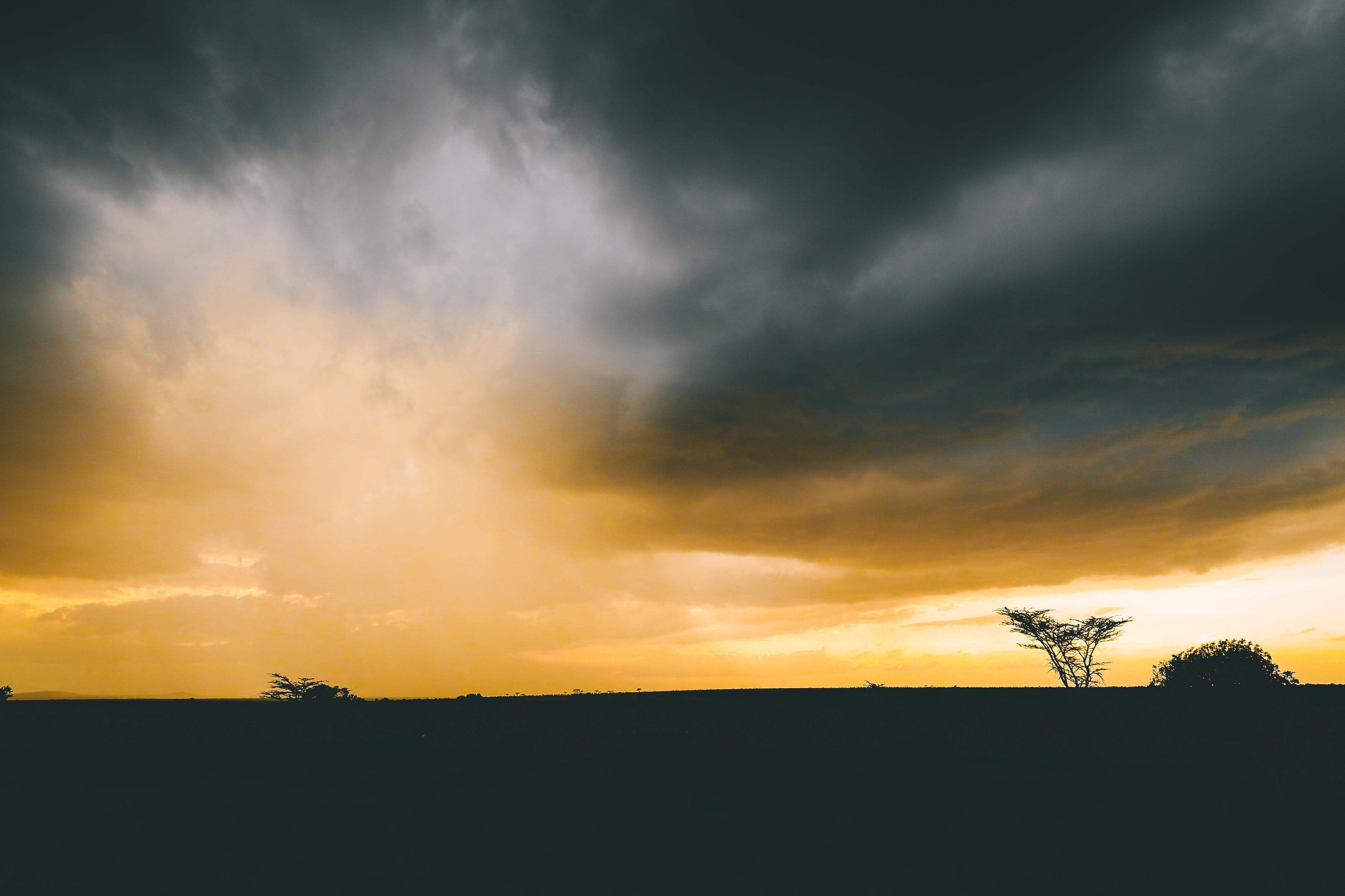 Silhouette of Tree Under Cumulus Clouds