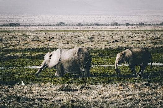 Gray Elephants on Green Grass Field