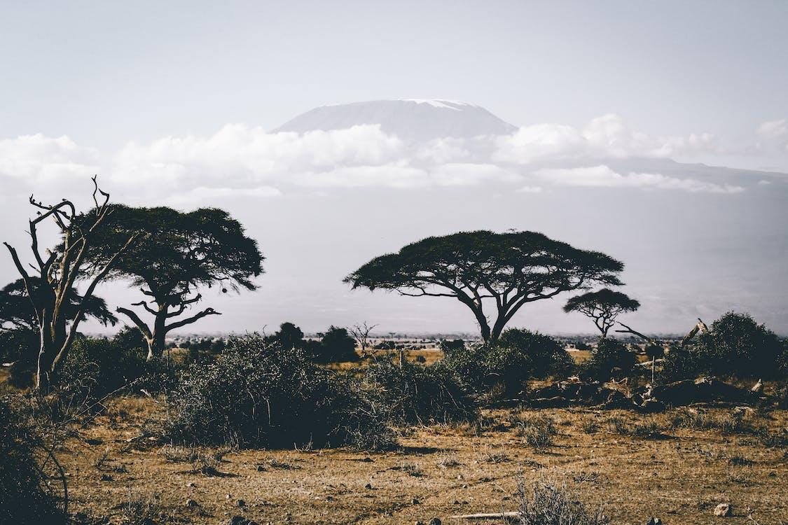 Kilimanjaro, Kenia, viaje, montaña