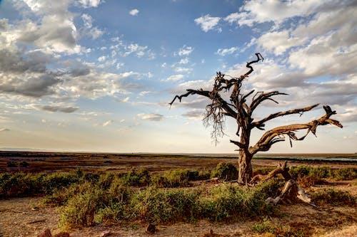 Základová fotografie zdarma na téma denní světlo, hřiště, kameny, krajina