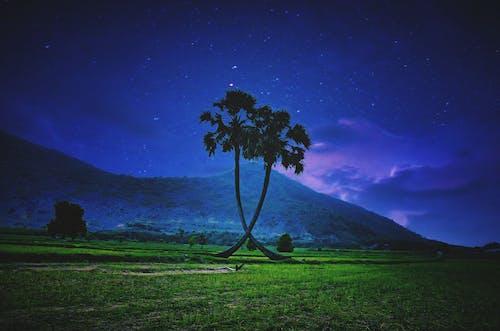 Free stock photo of coconut trees, evening sky, farm, field