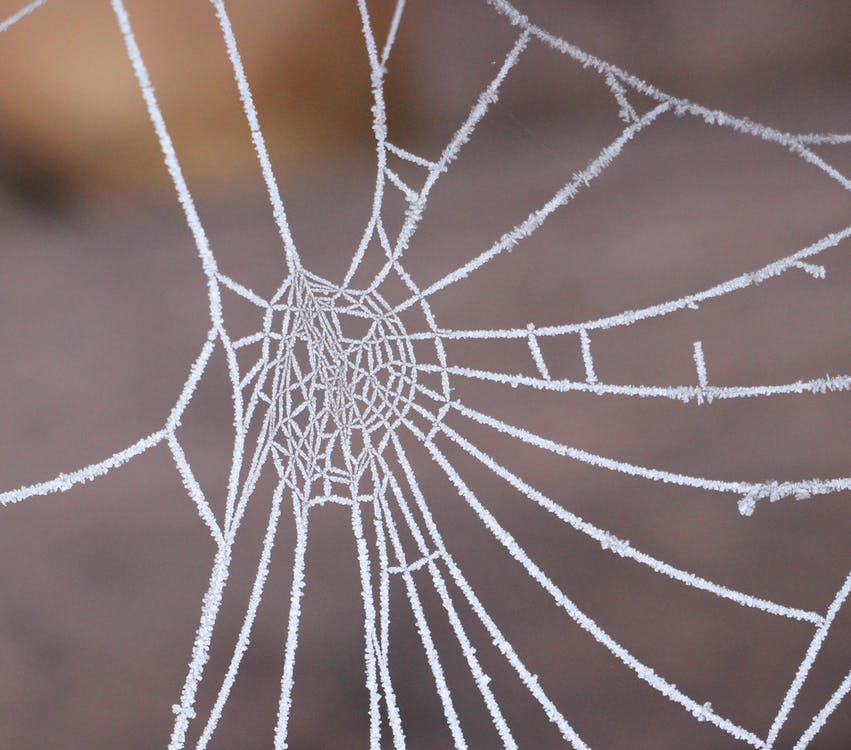 close-up, edderkoppespind, frost