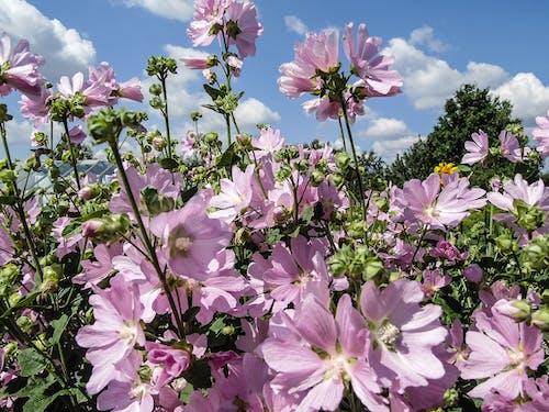 Fotobanka sbezplatnými fotkami na tému kvety, leto