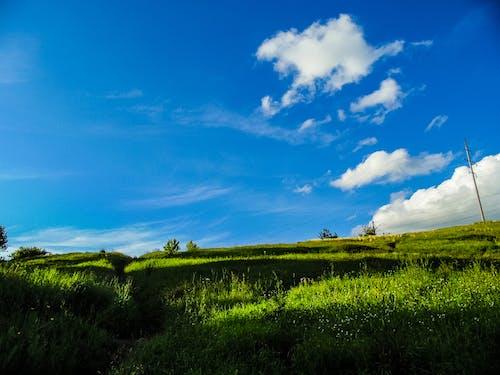 Gratis stockfoto met kalm, natuur, zomer