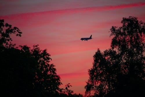 天空, 平面, 擺飾, 日落 的 免费素材照片
