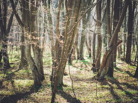 Free stock photo of wood, light, nature, sun