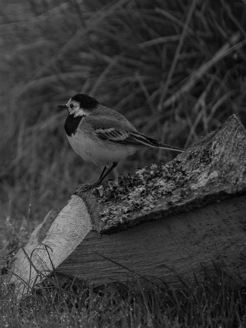 Grayscale Photo of Bird on A Wood