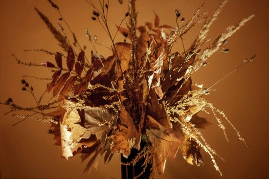 Free stock photo of autumn, fall, warm