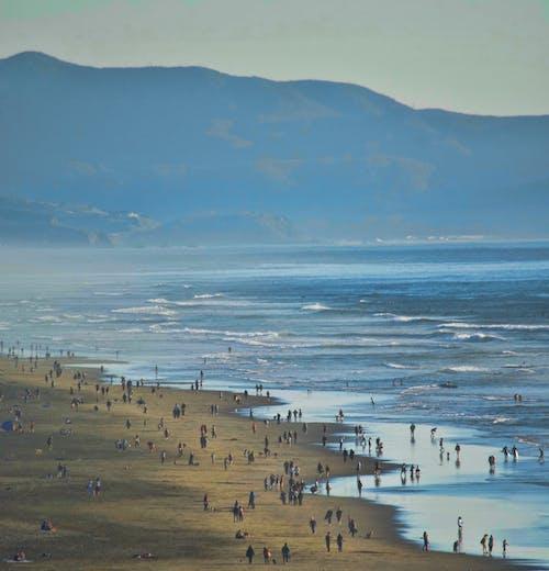Fotobanka sbezplatnými fotkami na tému beachcombing, oceán, pes, pes prechádzky