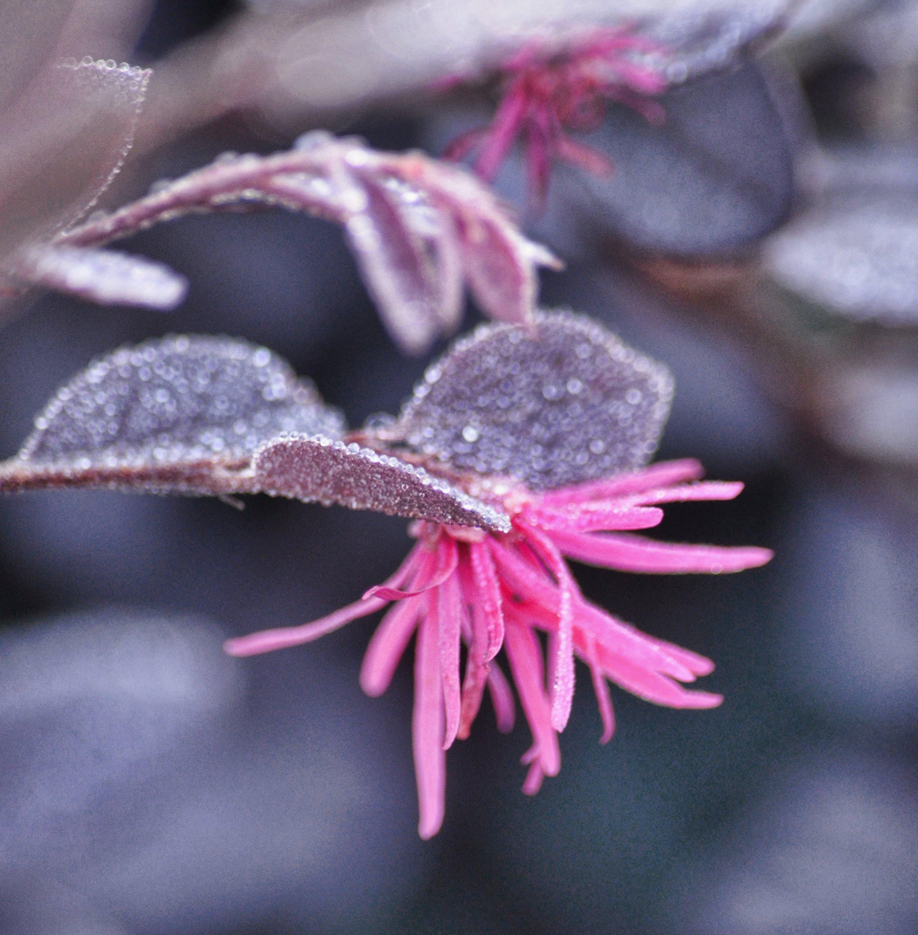 Free stock photo of bokeh, flowers, frost, frosty