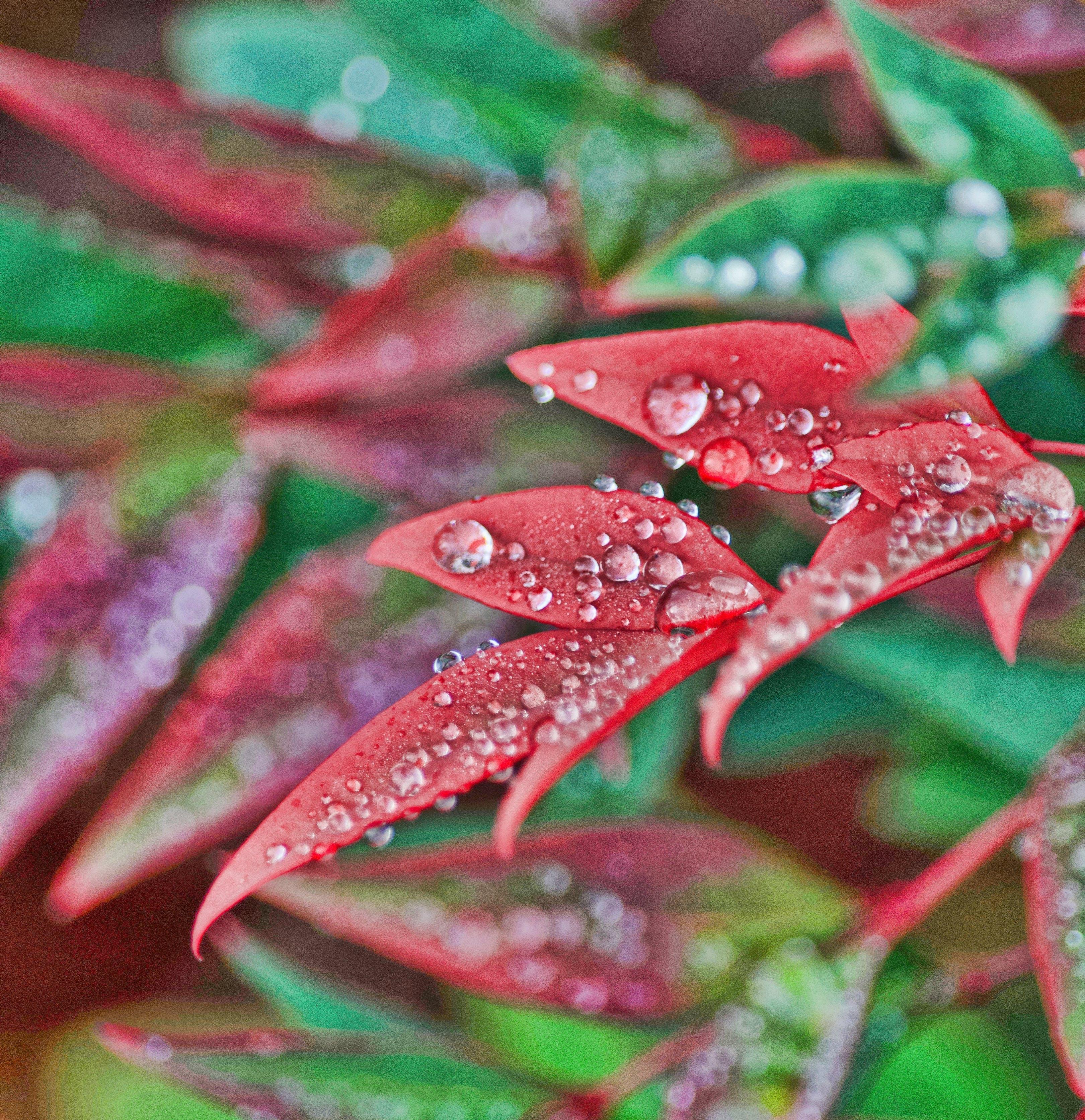 Free stock photo of bokeh, dew, dewdrops, green
