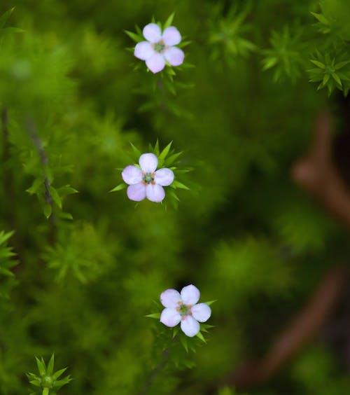 Foto d'estoc gratuïta de 3, delicat, flors