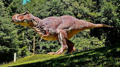Fotobanka sbezplatnými fotkami na tému dinosaurím, parque, ZOO