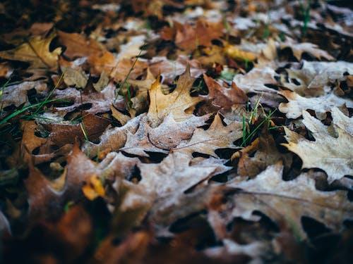 Ingyenes stockfotó fű, közelkép, száraz levelek témában