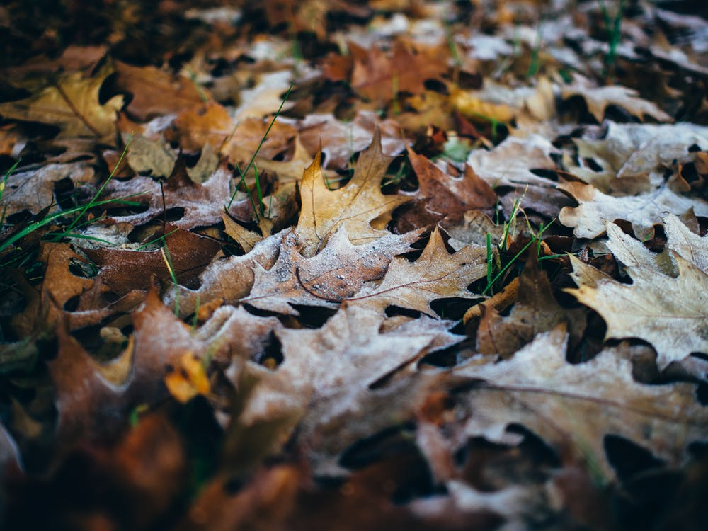 великий план, сухе листя, трава